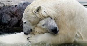 abrazo oso